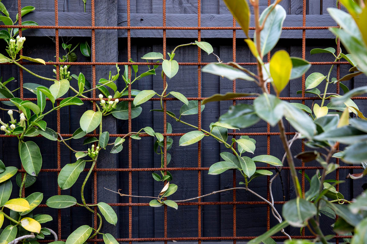 northcote-landscaping-2
